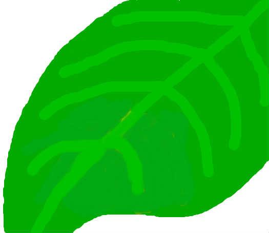背景 壁纸 绿色 绿叶 树叶 植物 桌面 525_455