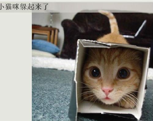 壁纸 动物 猫 猫咪 小猫 桌面 500_395