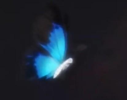 背景透明花瓣落下gif素材