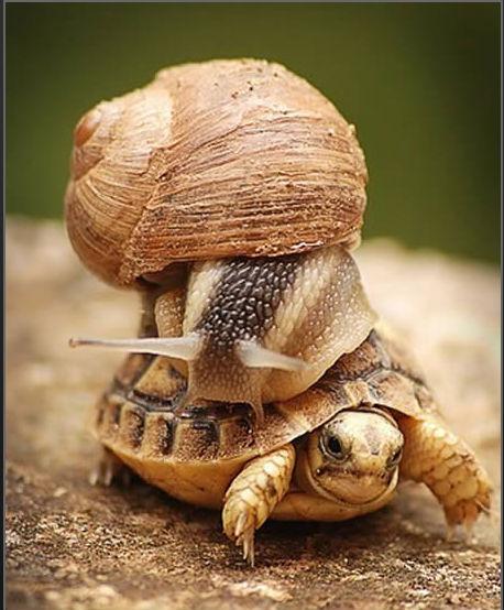 有趣的动物图片,快来看啊