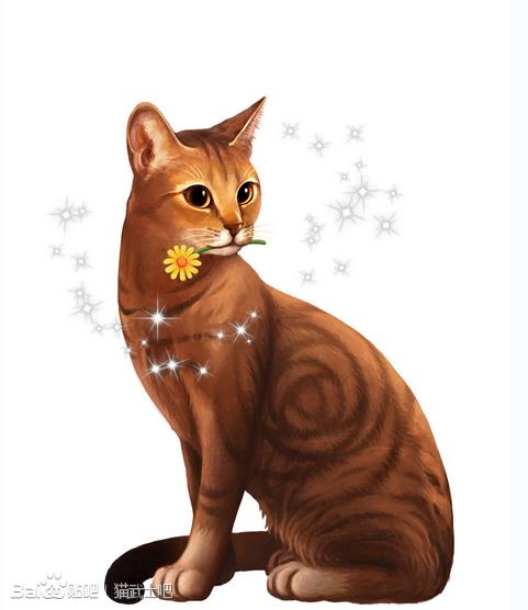 猫武士图片
