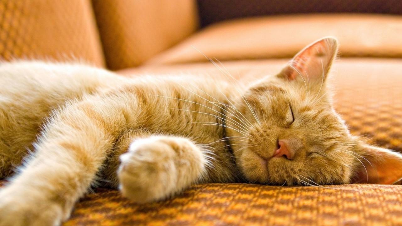 壁纸 动物 猫 猫咪 小猫 桌面 1280_720
