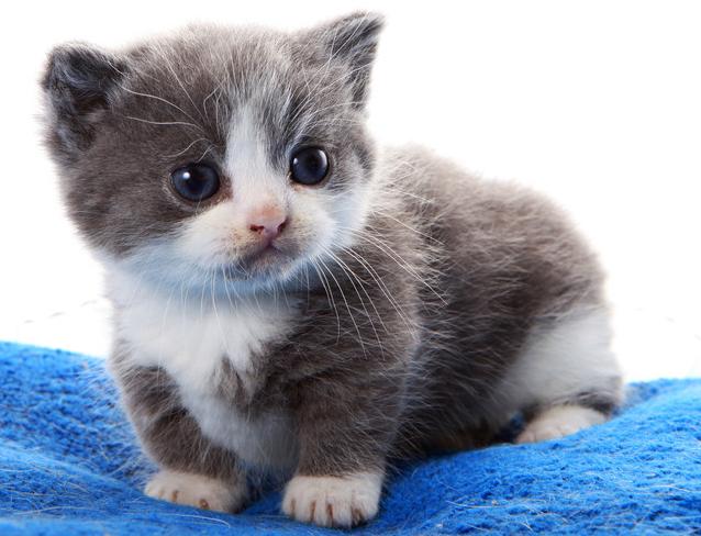 【小静】萌宠成长记_百田圈圈_百田网; 可爱的猫猫头像图片
