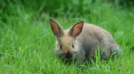 【寂静】各种可爱的小动物0u0