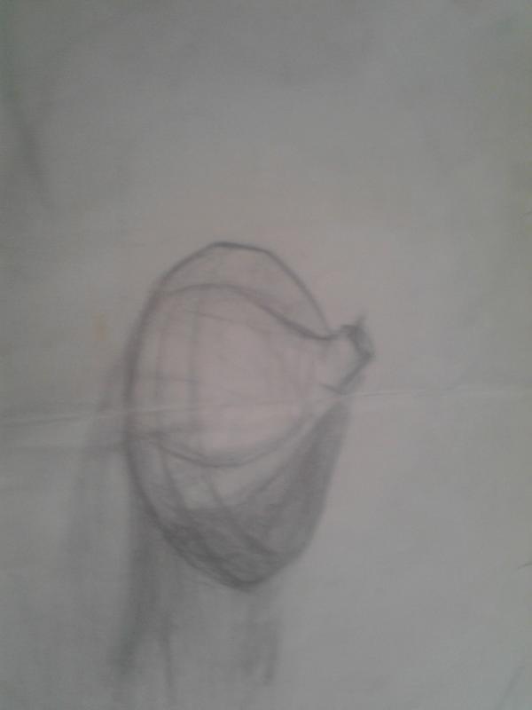 洋葱结构图素描