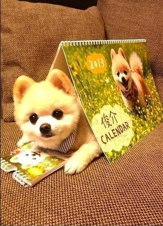 【盘点】那些可爱的明星狗品种