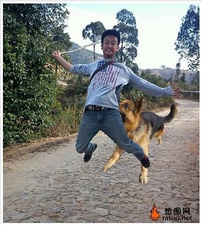 搞笑p图素材狗