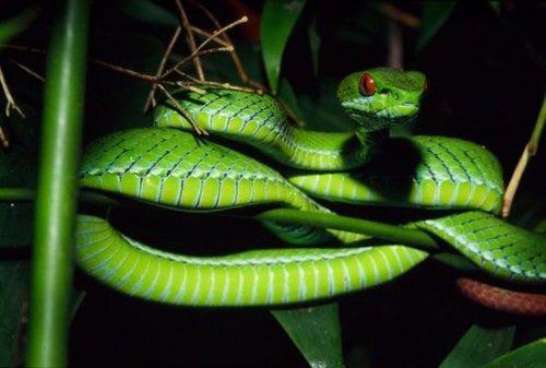 最可爱的真蛇图片大全