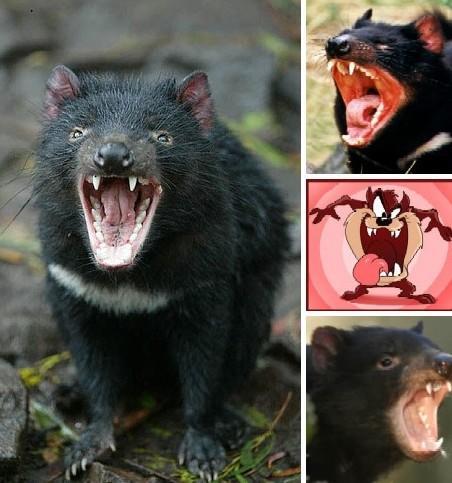 【开心】恶心至极的奇葩动物!