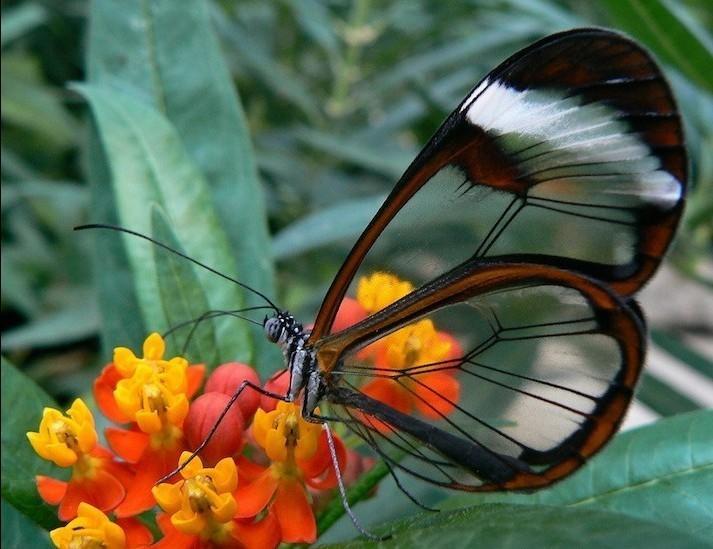 【晓忧】动物昆虫间的世界之最