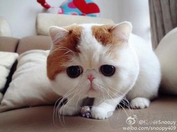 【陌涵】世界上最萌的小宠物