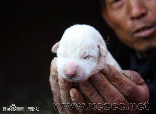 刚出生的小动物,你见过吗