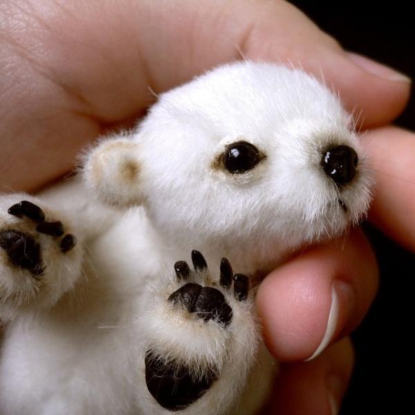 这些刚刚出生的小动物, 肉肉的,软软的, 好可爱.