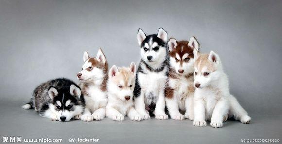 【冰纸】-转-世界上最智慧的前十动物排名