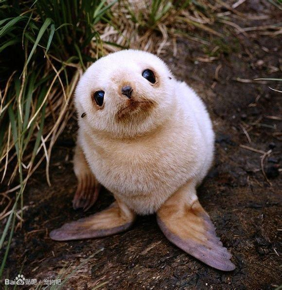 【沫稀】各种刚出生的小动物的图片,你全看过么?