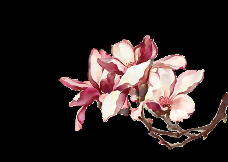 古风花手绘花朵