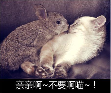 可爱萌宠猫qq背景带字