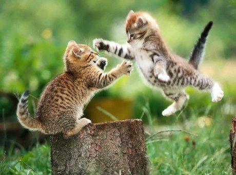 【阿冬】10个最稀有的品种猫 .【冰糖】当动物们被规则化后 .