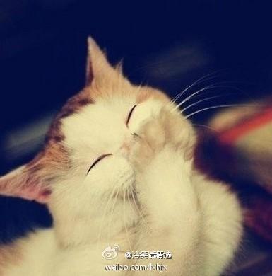 闺蜜头像小猫三张可爱