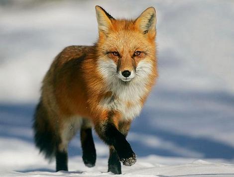 能象征冬天的动物有谁