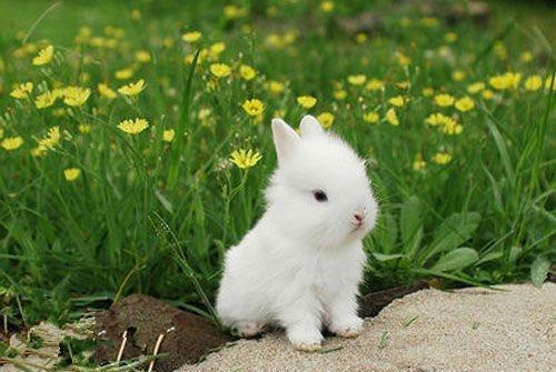 来看看这些萌萌的小动物吧