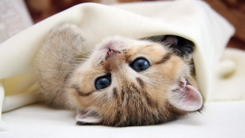 【青溟涯-五喵】可爱的动物桌面,萌死你